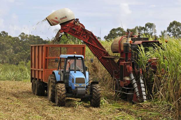 Maintien des soutiens à la filière sucre par le gouvernement