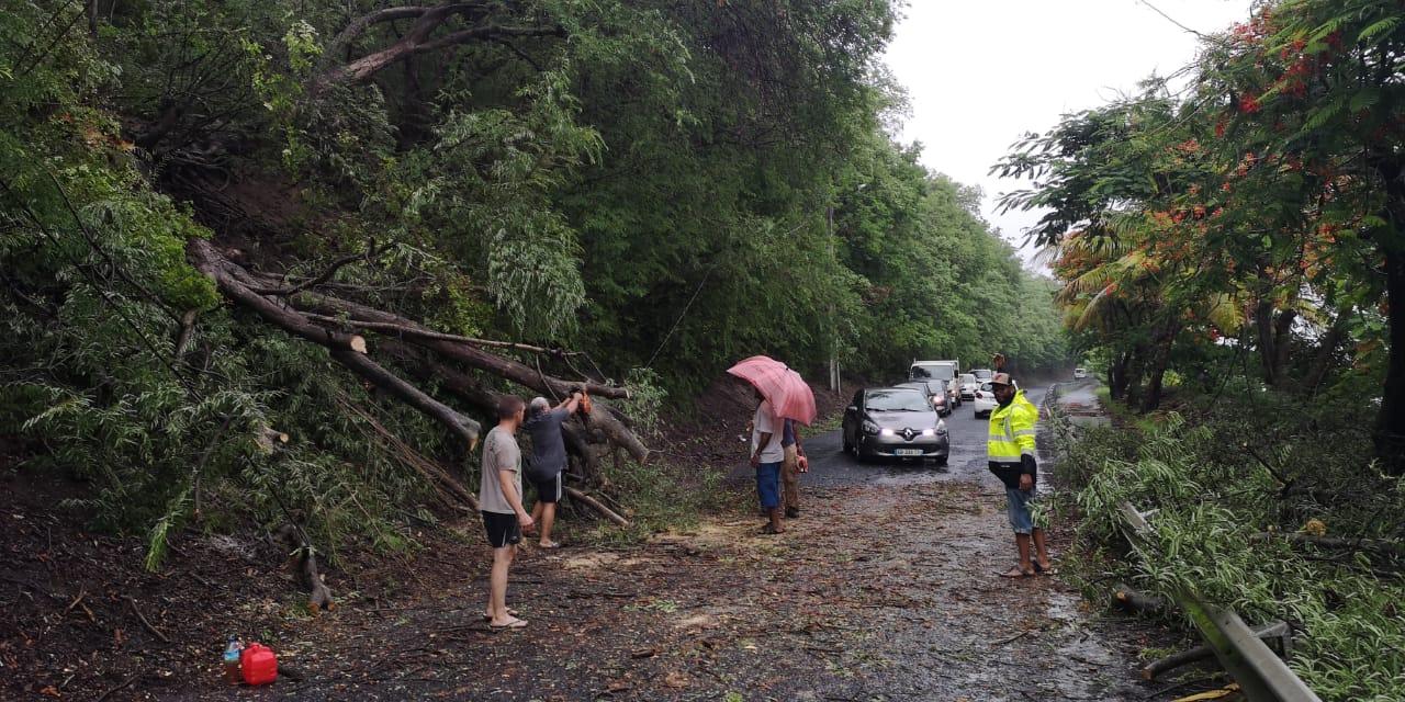 Au Prêcheur, la circulation est difficile après la chute d'un arbre sur la route