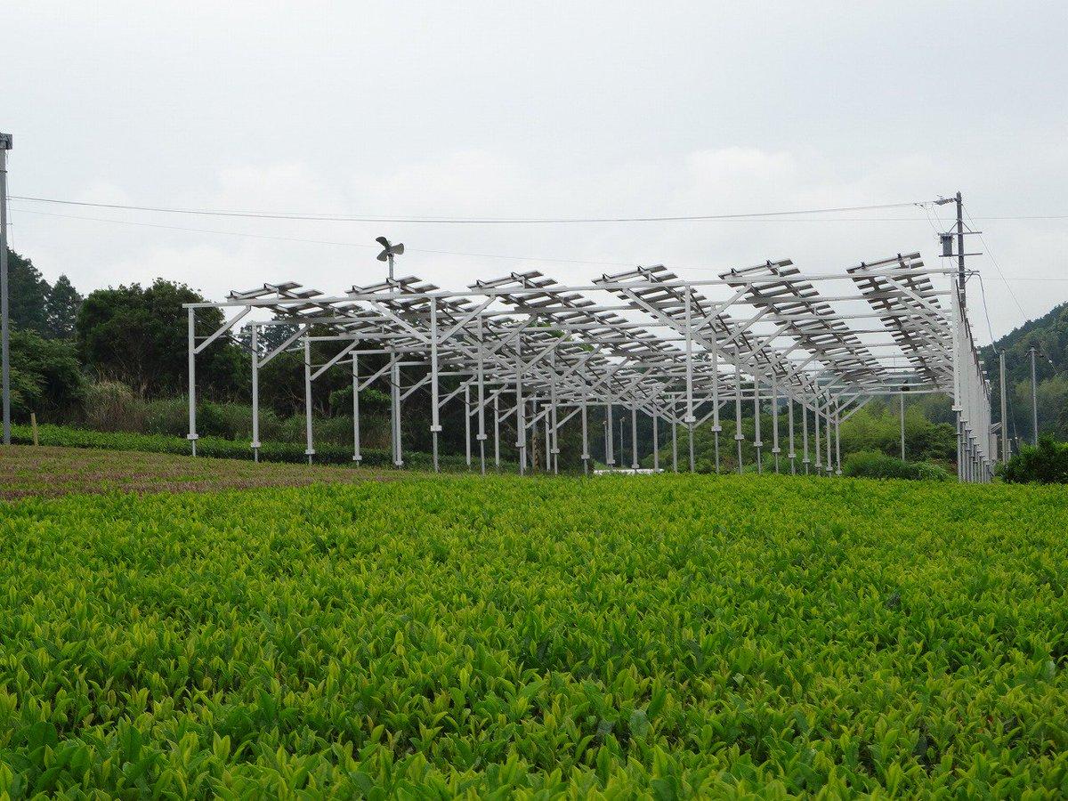 Agrivoltaïque : l'inquiétude des élus de Marie-Galante