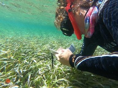 Sainte-Anne au chevet de son lagon : vers une replantation des coraux ?