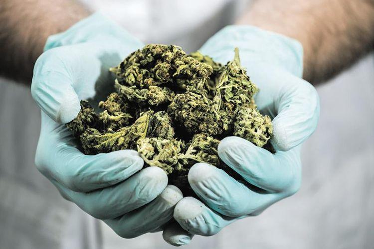 L'Assemblée nationale lance une consultation publique sur le cannabis