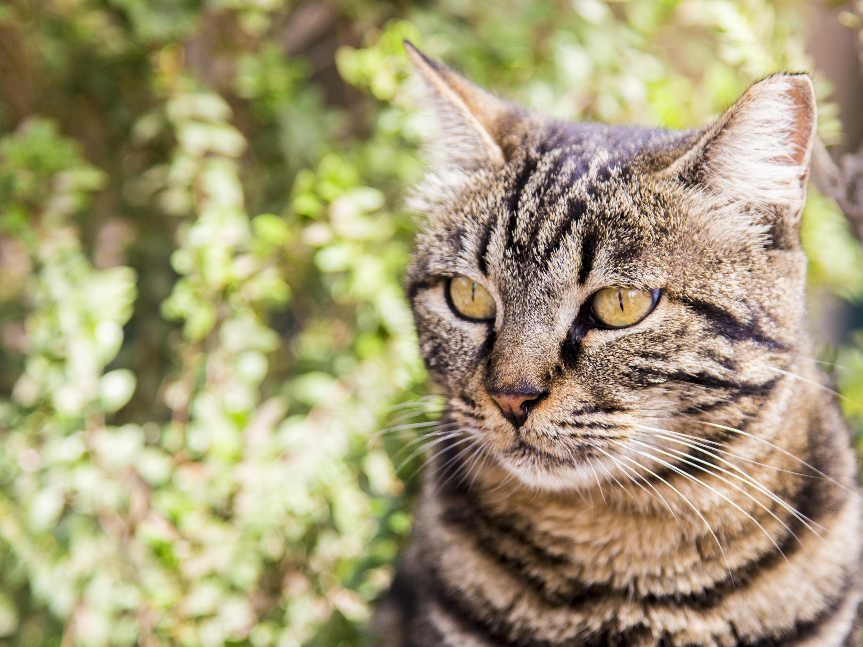 41 jours après, Noémie retrouve son chat Zadig