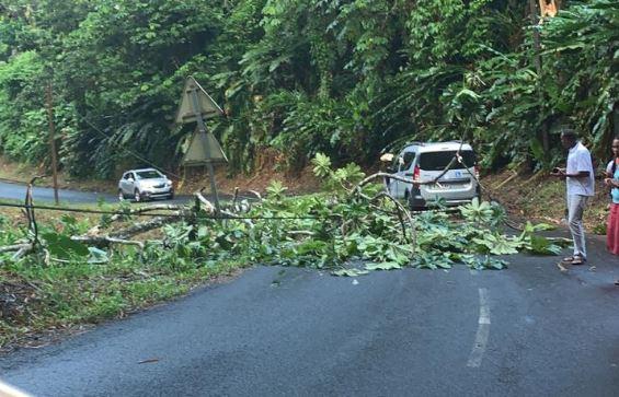 Un arbre tombe sur la route à Saint-Joseph et percute une voiture