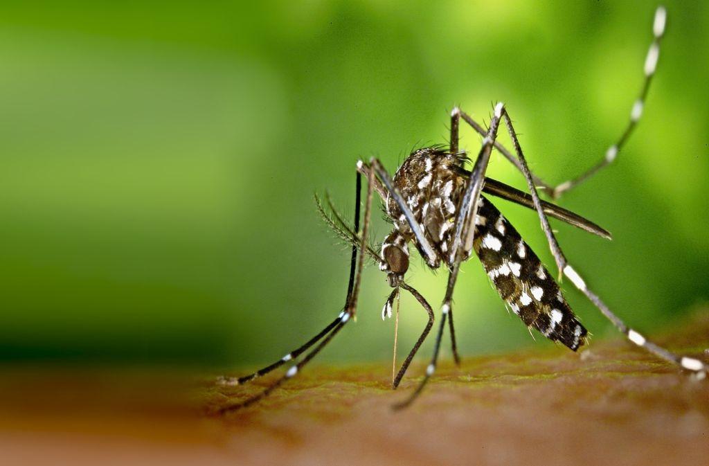 Dengue : pas d'augmentation des indicateurs de surveillance épidémiologique