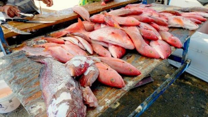 Ciguatera : inquiétude des marins pêcheurs