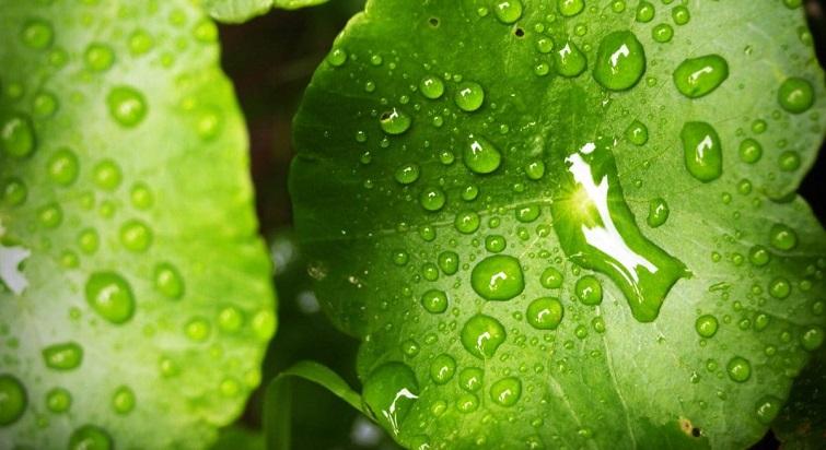 Cinq astuces pour jardiner sous la pluie
