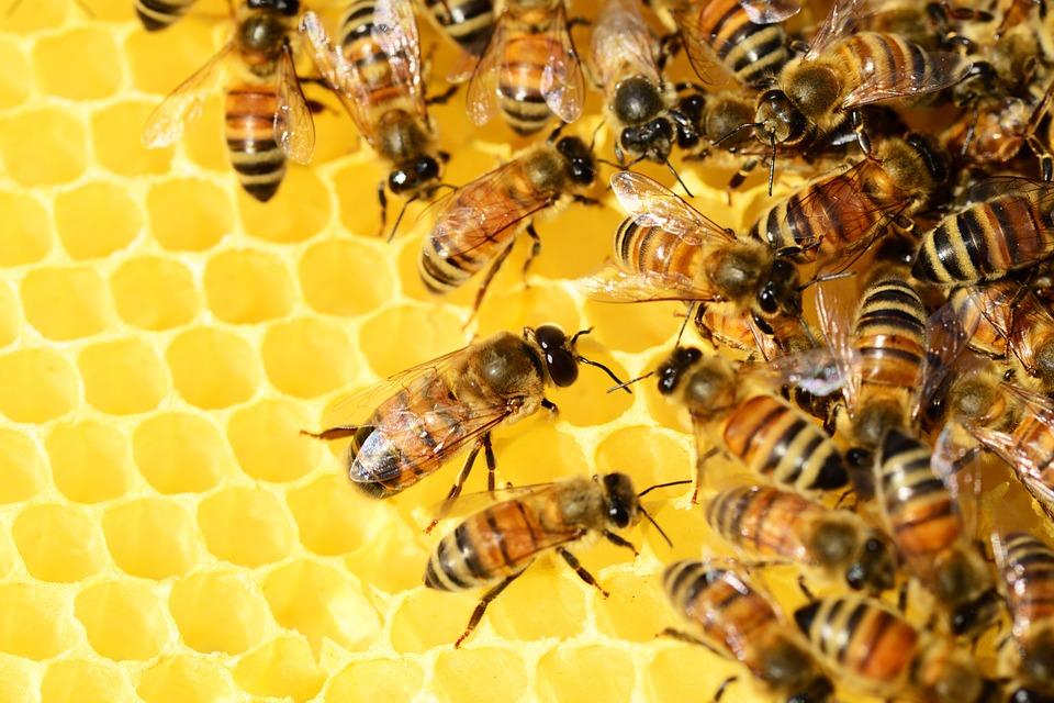 Des écoliers de Petit-Bourg confinés à cause d'un essaim d'abeilles
