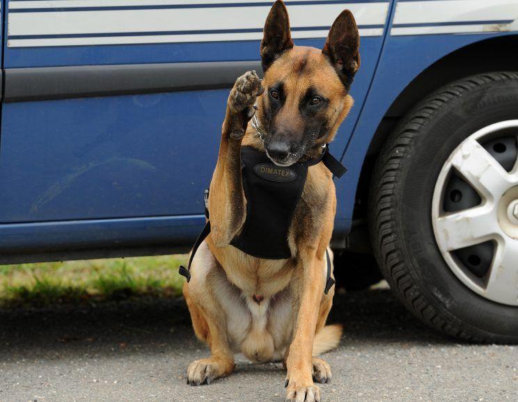 Le chien gendarme retrouve un octogénaire disparu