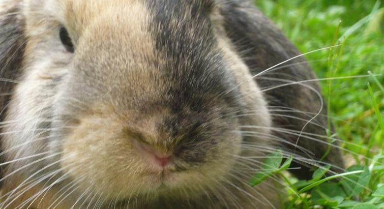 Tous les conseils pour entretenir un lapin