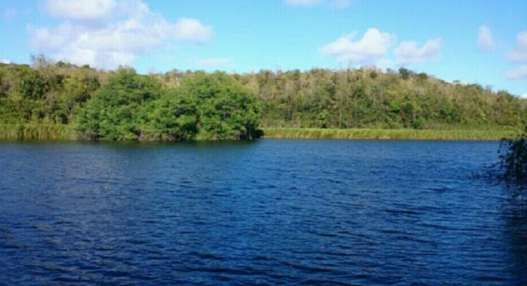 Partez en balade dans la mangrove de Vieux-Fort à Saint-Louis de Marie-Galante