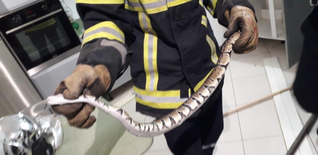 Encore un serpent récupéré à Sainte-Anne