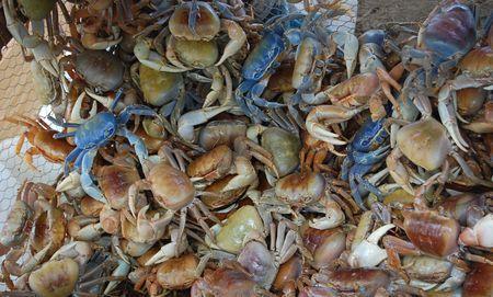 La maison du crabe cambriolée : un suspect condamné