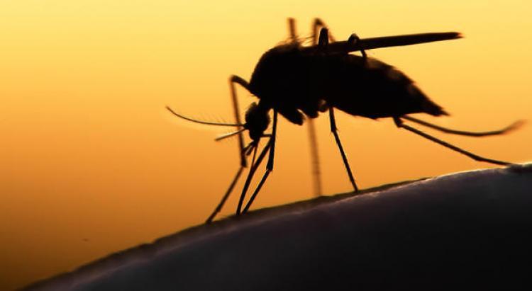 Toussaint : attention aux moustiques