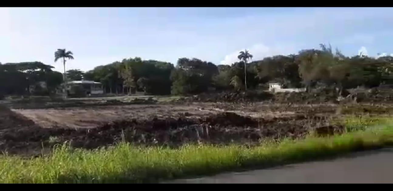 Des arbres centenaires détruits sans autorisation à Port-Louis