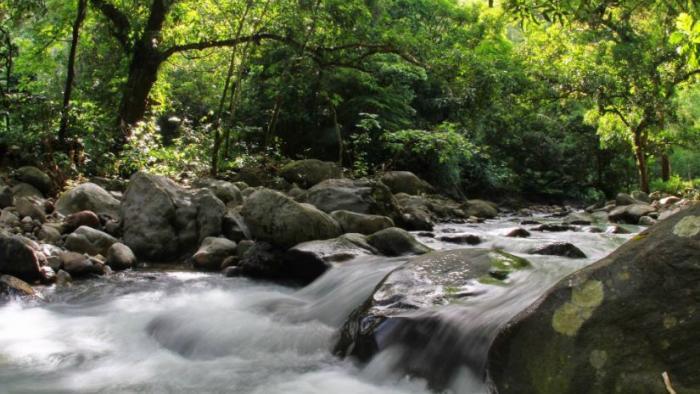 Chlordécone : un mince espoir pour l'aquaculture en rivière