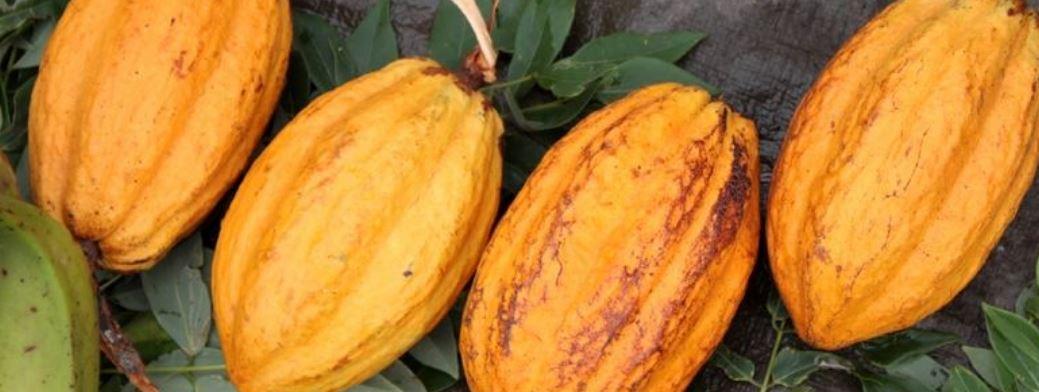 Le cacao au cœur d'une collaboration entre un artisan chocolatier et les élèves du LPA au Robert