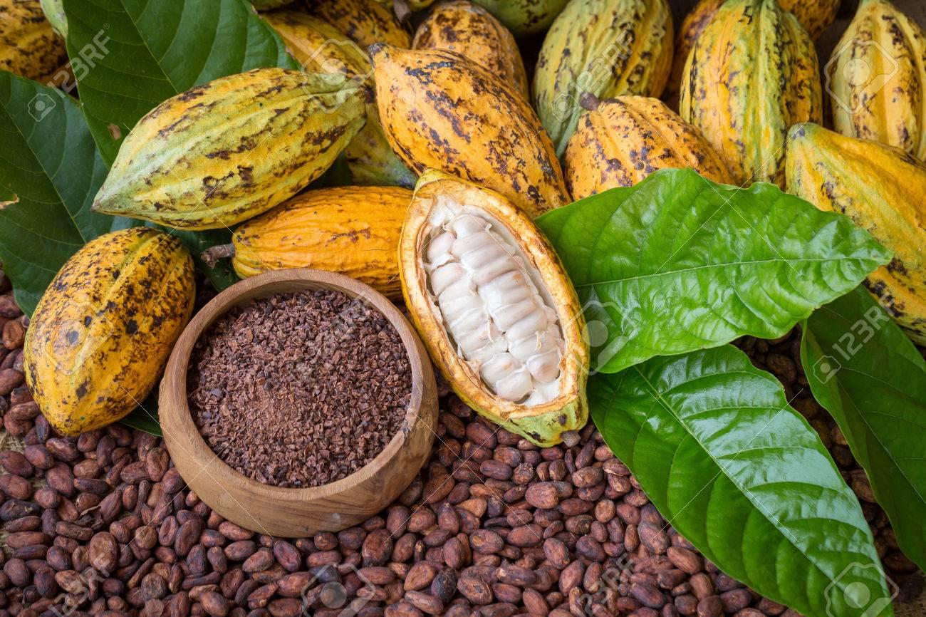 3 tonnes de cacao produites par an, la Guadeloupe peut mieux faire