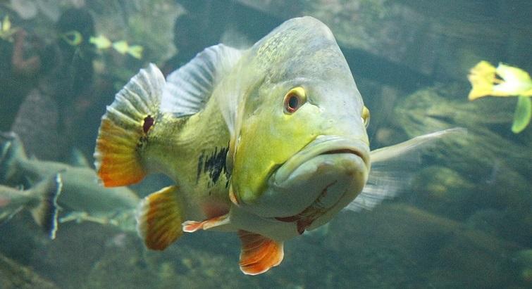 Les conseils pour entretenir un aquarium