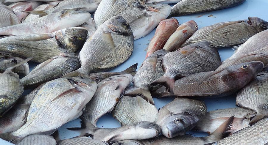 La pêche du Venezuela est légale selon la préfecture
