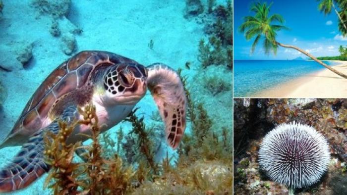 Un programme d'actions riche mis en place en 2020 pour le Parc Naturel Marin de Martinique