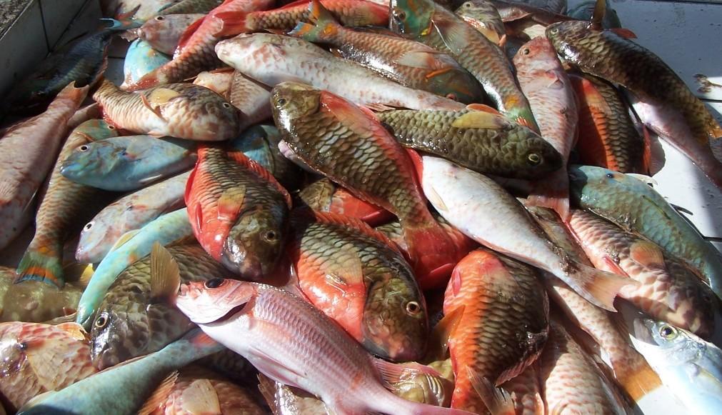 Les pêcheurs des Trois-Îlets s'opposent à une interdiction de pêche au casier