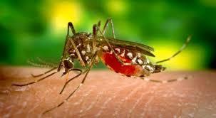 La dengue a battu des records en 2019 dans la Caraïbe