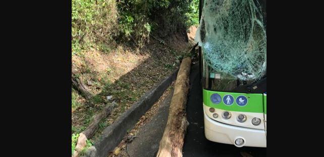 Un arbre tombe sur un bus Mozaïk entre Fort-de-France et Saint-Joseph