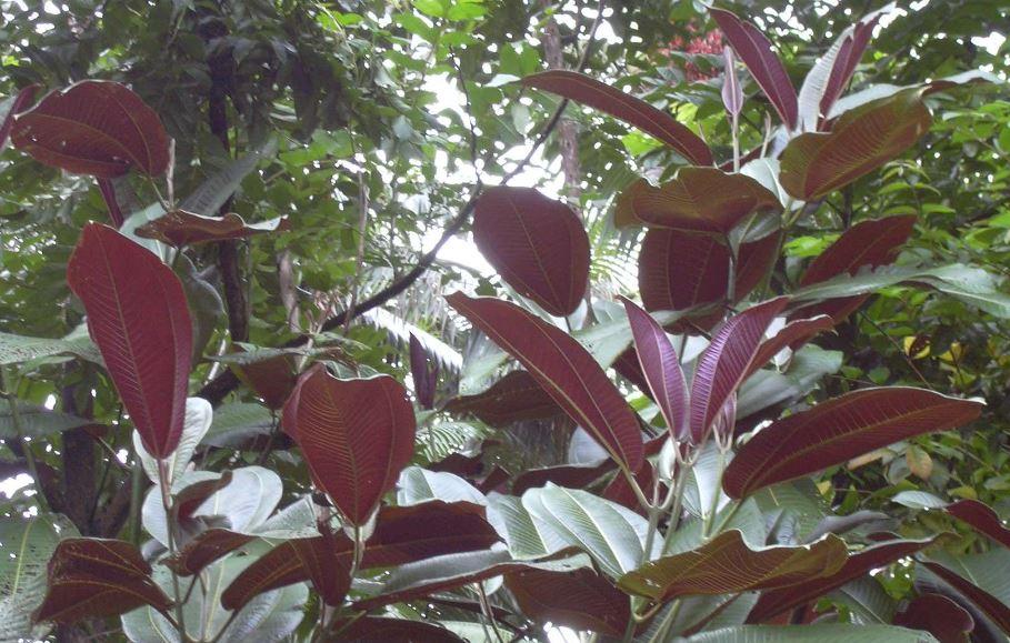 Une plante envahissante menace l'écosystème local