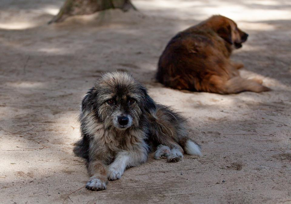 5 chiens sauvés après être tombés dans un puits
