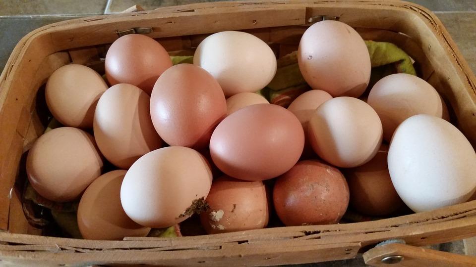 Consommation d'œufs : les producteurs locaux sollicités