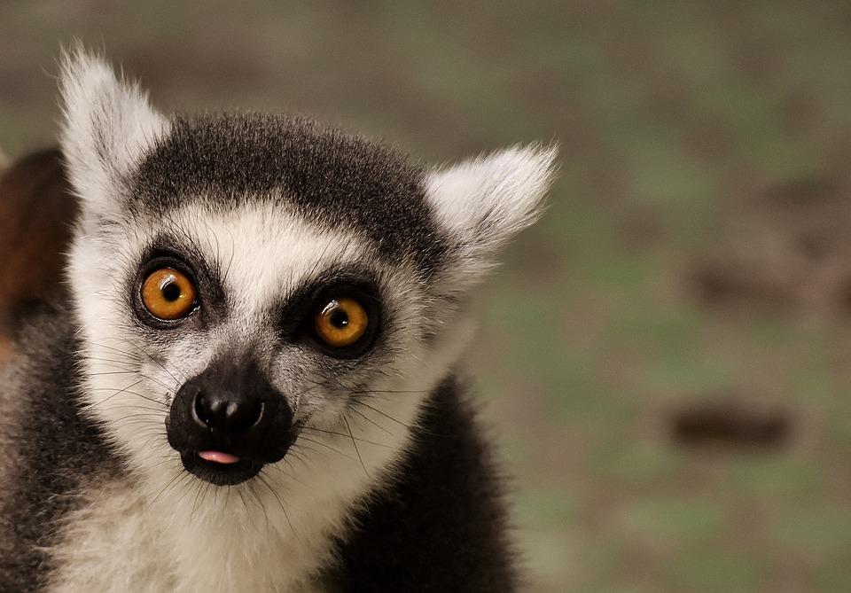 Réouverture du zoo de Guadeloupe au public