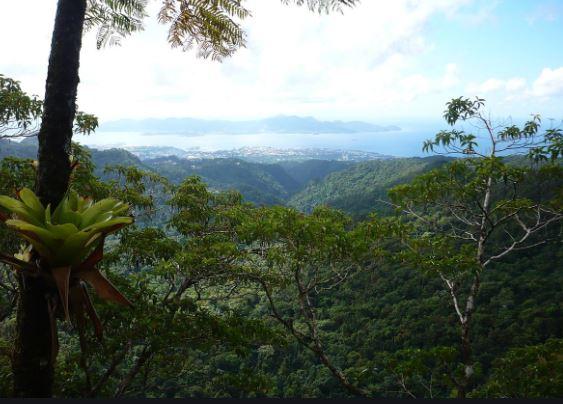 La DAAF Guadeloupe recrute une cinquantaine d'enquêteurs