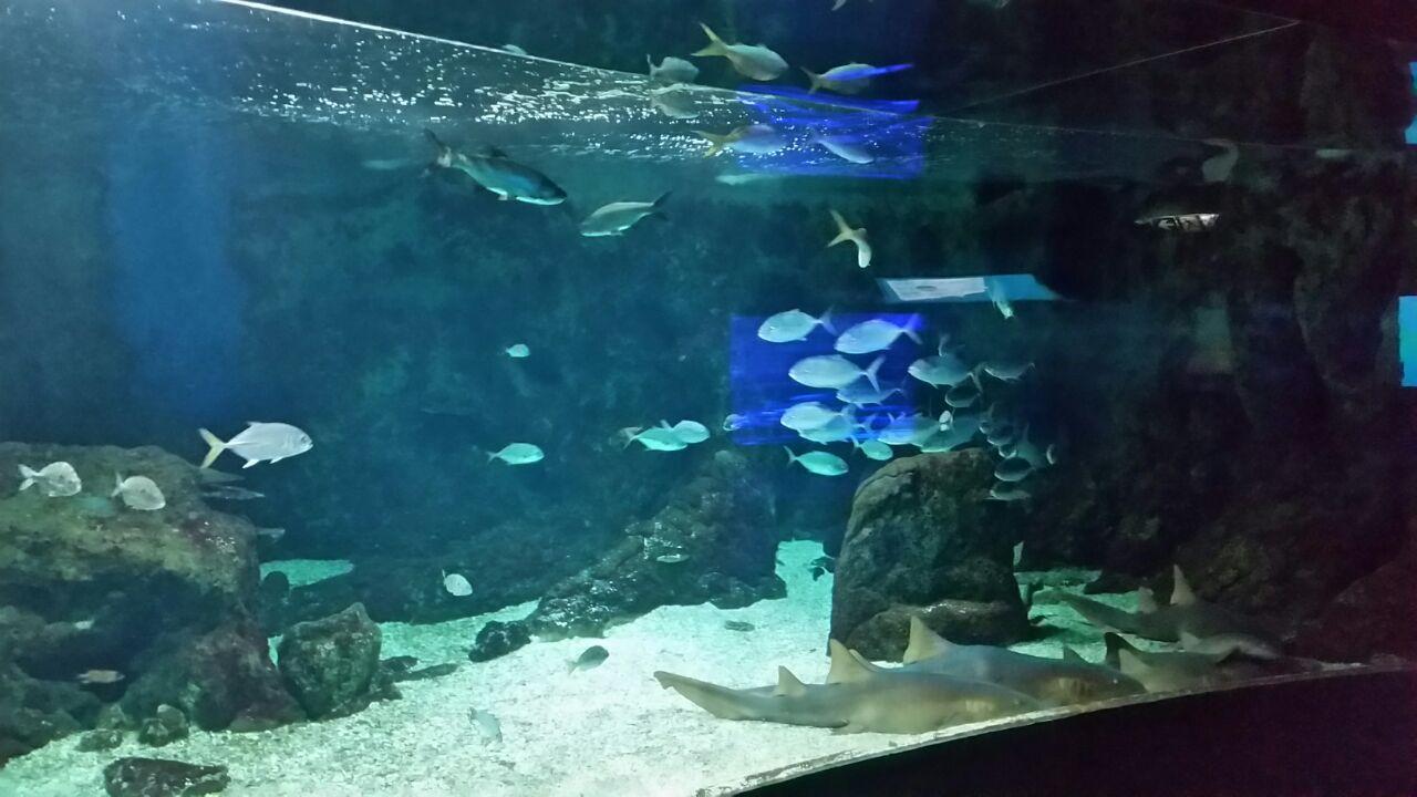 L'aquarium de Guadeloupe rouvre ses portes