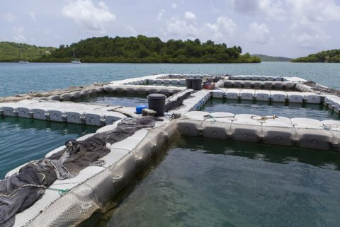 Vol d'une cinquantaine de poissons reproducteurs  à l'IFREMER