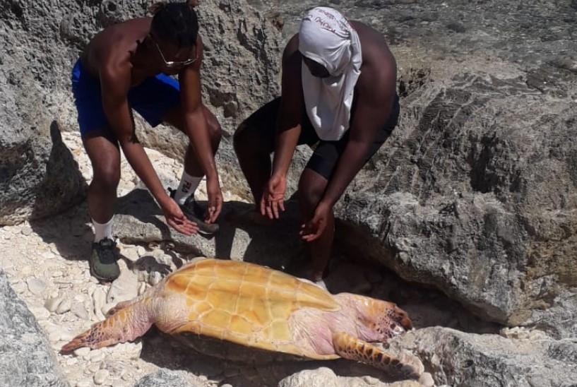 Une famille de randonneurs aide une tortue en détresse