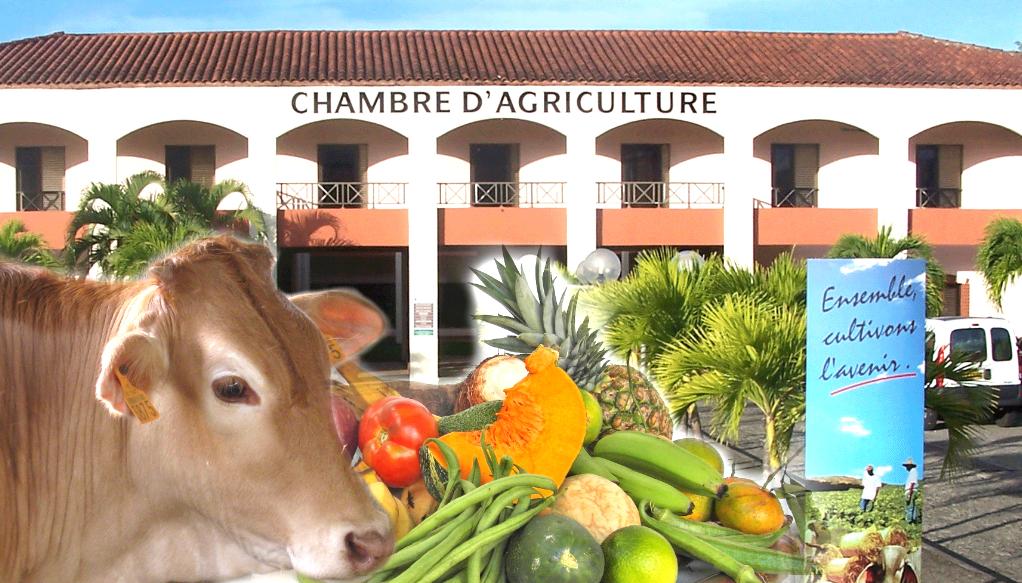 Les agriculteurs de Martinique mobilisés face à la sécheresse.