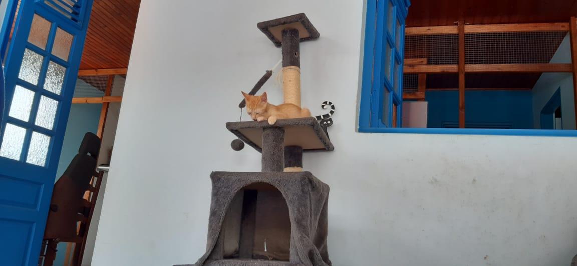 Une maison refuge pour les chats