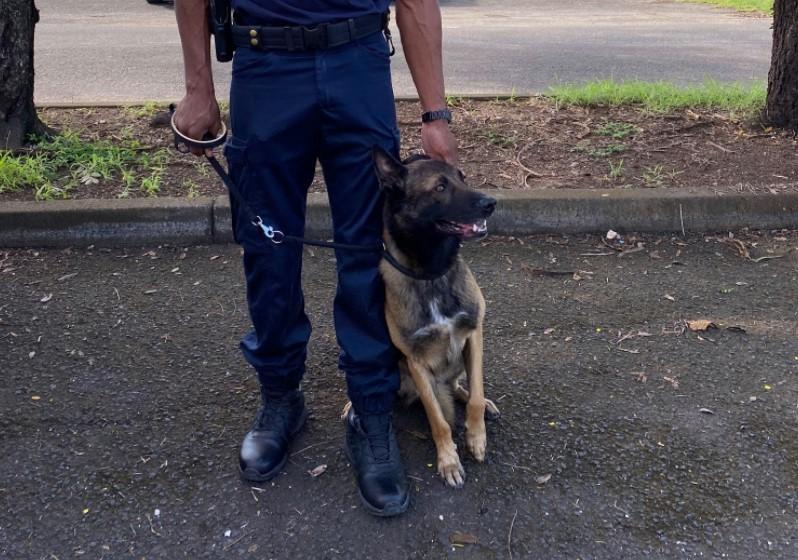 Nicky, le nouveau chien policier spécialisé en explosifs