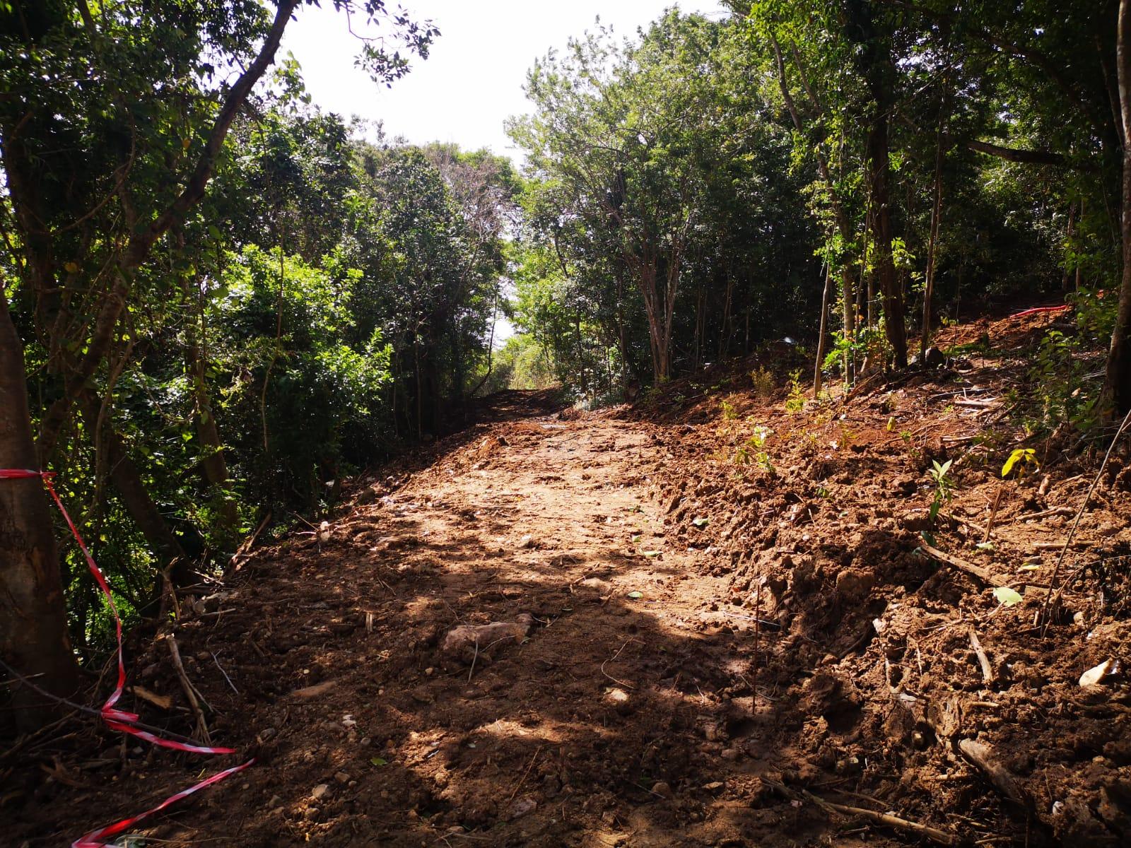 Arrêt du chantier à Terreville : l'Assaupamar veut reboiser