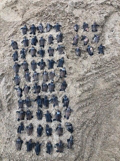 68 tortillons retrouvés morts à Sainte-Rose