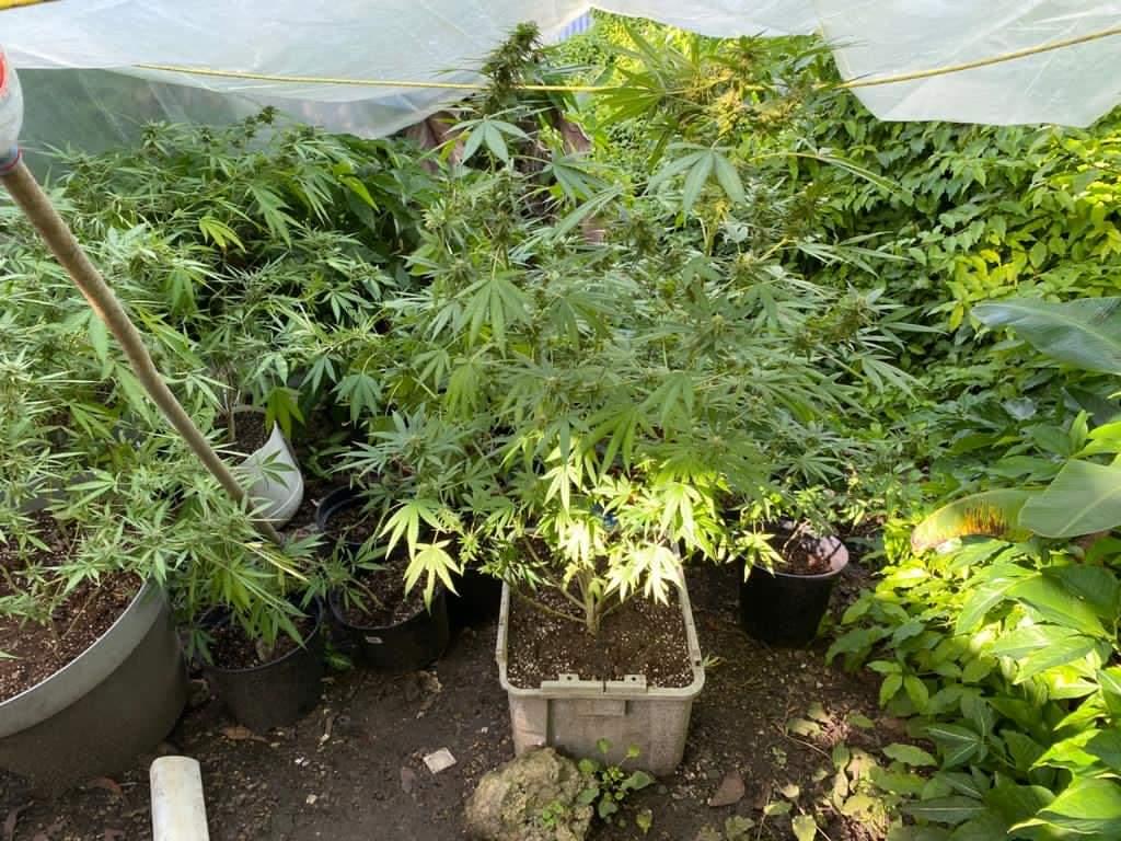 Deux suspects interpellés pour trafic de drogue aux Abymes