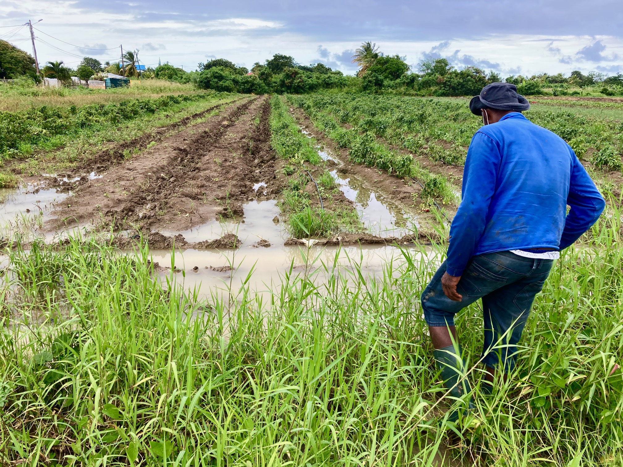 Les agriculteurs lourdement impactés par les intempéries