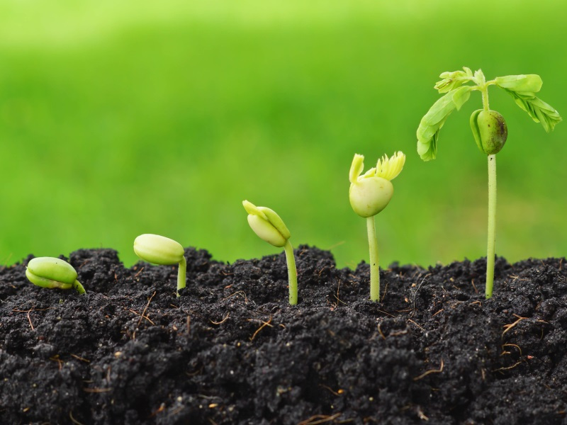 CambioNet : un réseau caribéen pour bâtir l'agriculture de demain