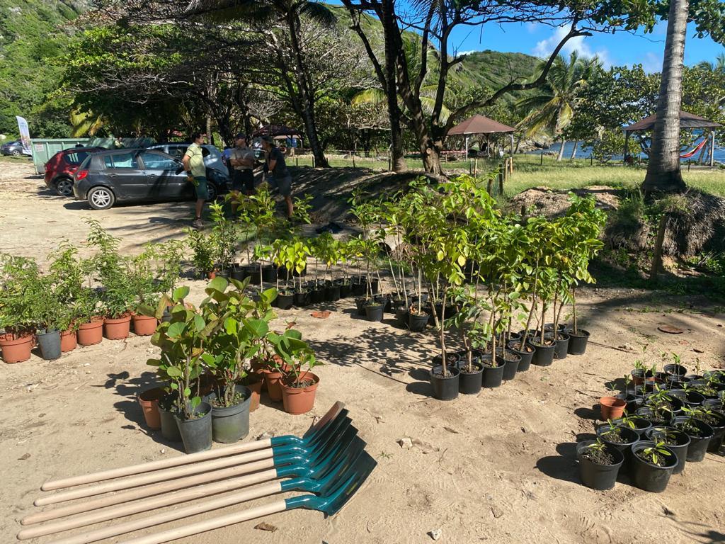 L'ONF Guadeloupe reboise et ramasse les déchets à l'Anse Maurice
