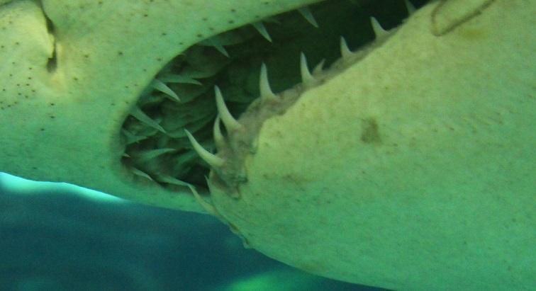 Des mesures prises à Saint-Martin après l'attaque mortelle par un requin