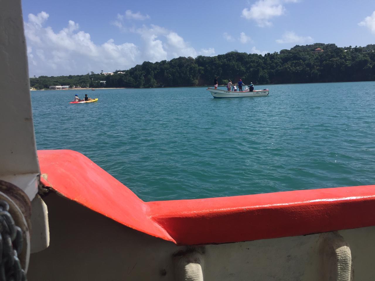 Mobilisation pour sauver un jeune cachalot dans la baie des Raisiniers à Trinité