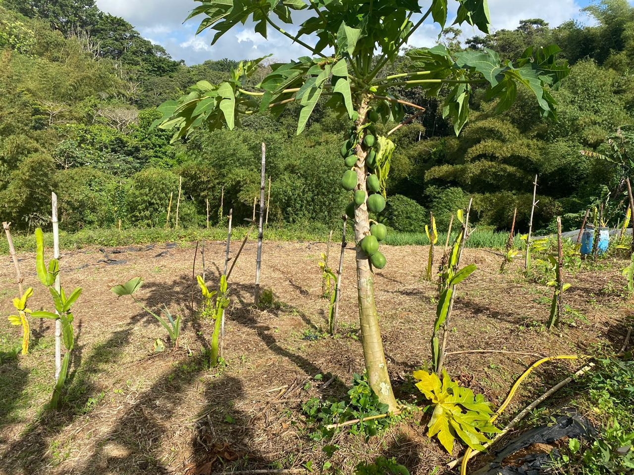 La route des fermes bio de Martinique réunit producteurs bio et chefs d'exception