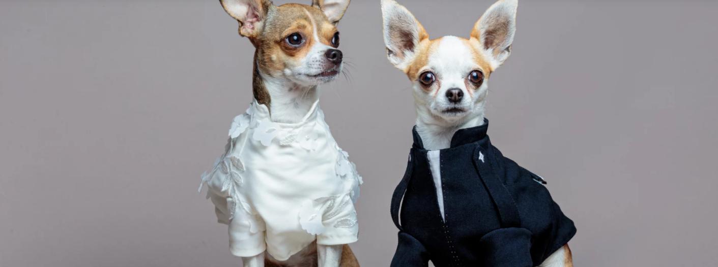 Des Martiniquaises se lancent dans l'univers de l'habillement pour chiens