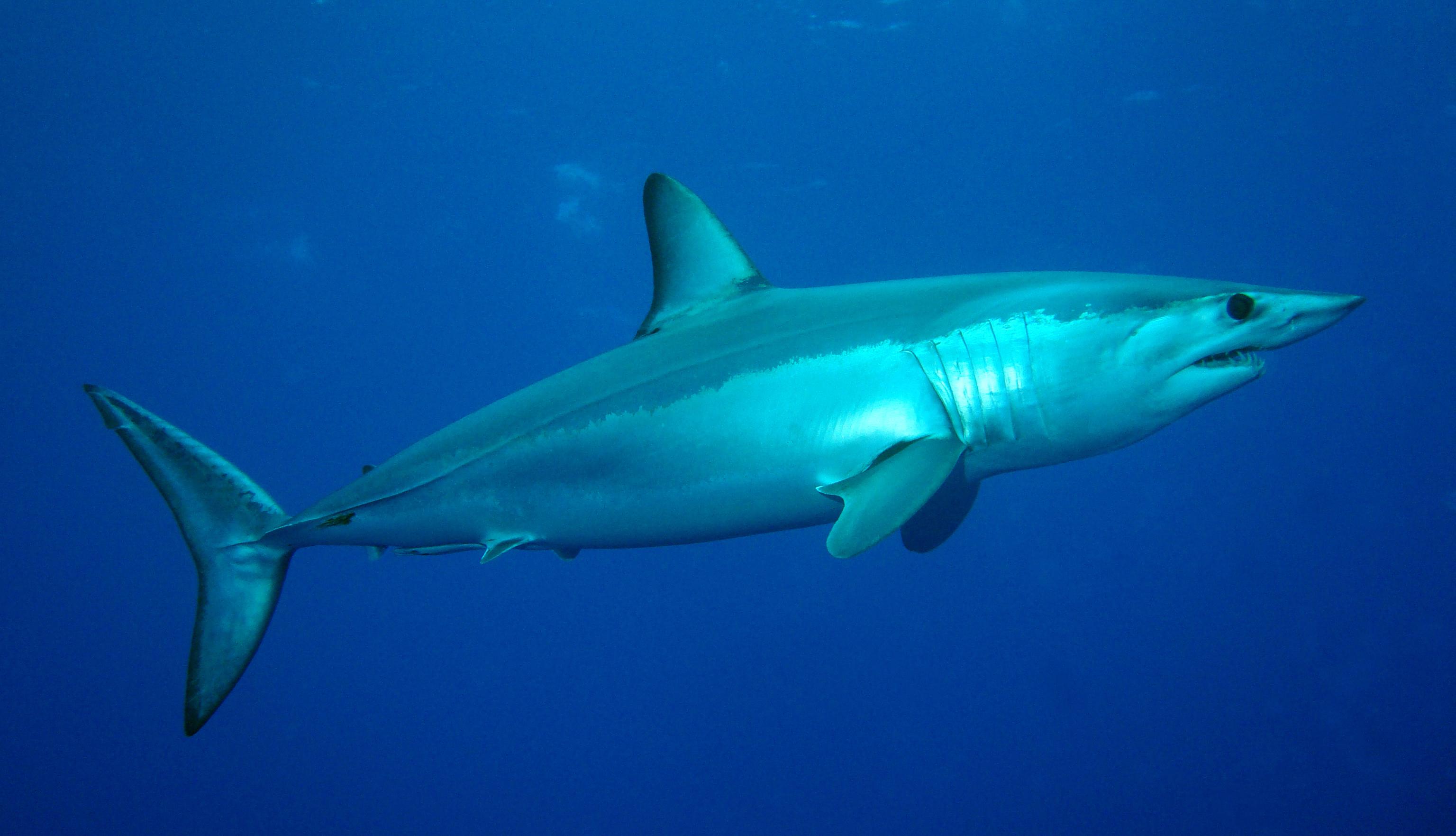 Une vidéo d'un requin tiré hors de l'eau fait le buzz sur internet