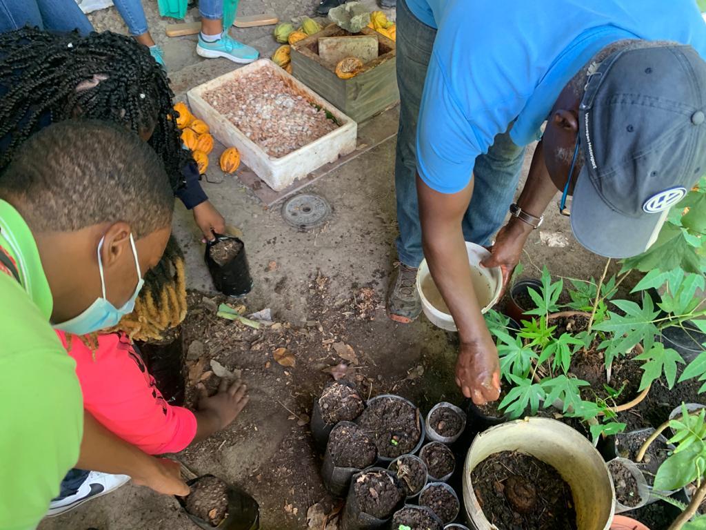 La filière du cacao de Martinique sensibilise les plus jeunes à leur patrimoine